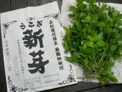 朝摘み 生うこぎ新芽(120g袋詰)受注生産品